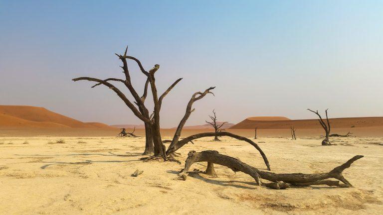 Namibeko basamortua