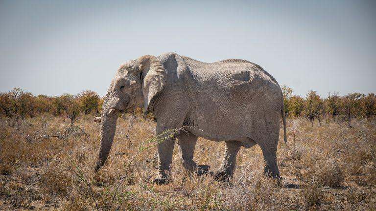 Sossusvlei elefantea
