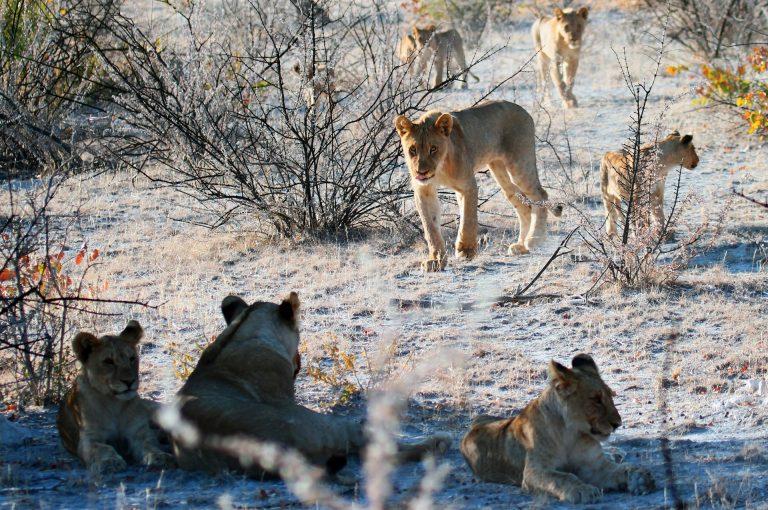 Etoshako parke nazionaleko leioak