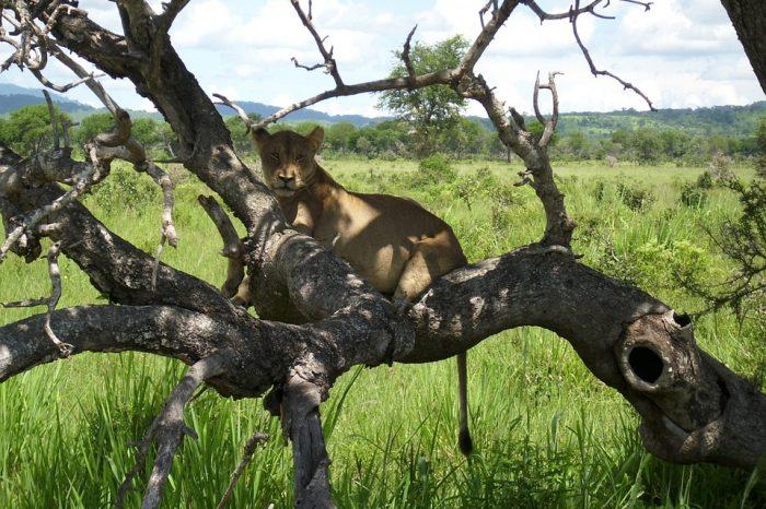 Safari a Mikumi, Parques Nacionales de Udzungwa y Ruaha con playas de Zanzibar