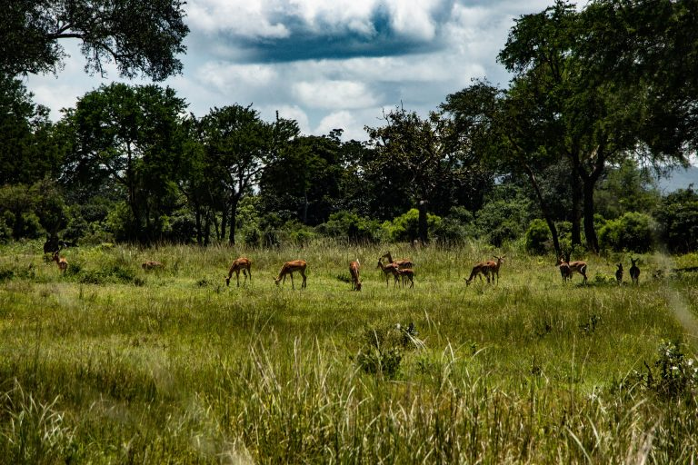 Safari Mikumi