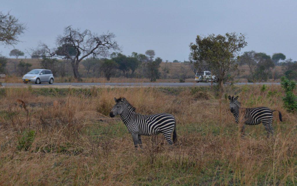 ¡Es una maravilla Los animales viviendo en su hábitat.